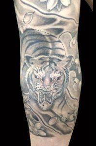 虎と桜散らしの刺青、和彫り画像(彫いち)